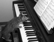 Уроки музыки на дому. Красноярск