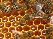 Продам мед гречишный и цветочный. Опт и розница.